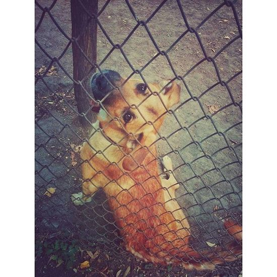 Super cute dog begging for attention Dog Pet Cute Heartmelting Cotroceni Bucharest Ig_bucharest Ig_romania
