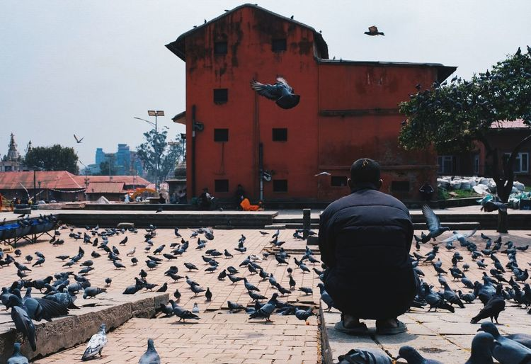People Birds