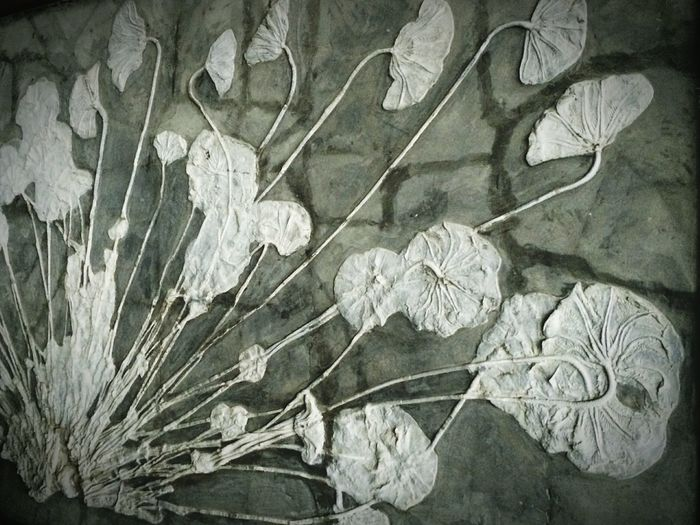 Shades Of Grey Realyphotography This stone panel of really gray color, without is black the white filter. Art China Lotus Leaf Sommergefühle