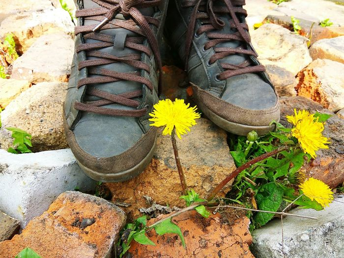 Out Of The Box Day High Angle View Outdoors No People Nature Beach Sand Close-up Standing Top View Shoes Floor Retro Stone Human Leg Fashion Nature Plant Flower Flower Head Dandelion Dandelion Seed Sneakers Sneakers ♥ Live For The Story