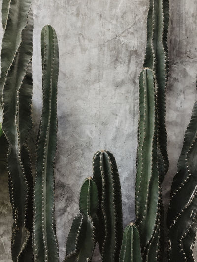 Succulent plant growing against wall