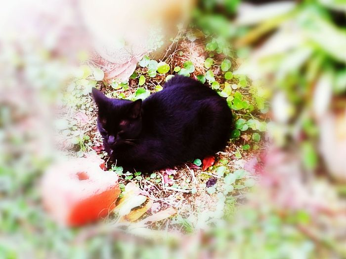 One Animal Pets Black Color Outdoors Medition Cat