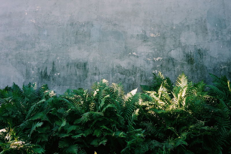 Plants growing against concrete wall