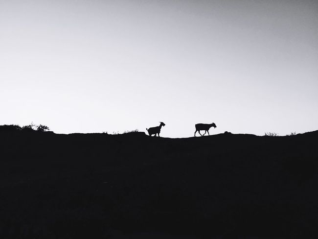 Chasing Life Blackandwhite Travel Travelmorocco Asilah Morocco Bnw_life Bnw Silhouette Animal Themes Animals In The Wild Nature Beauty In Nature Outdoors Animal Wildlife