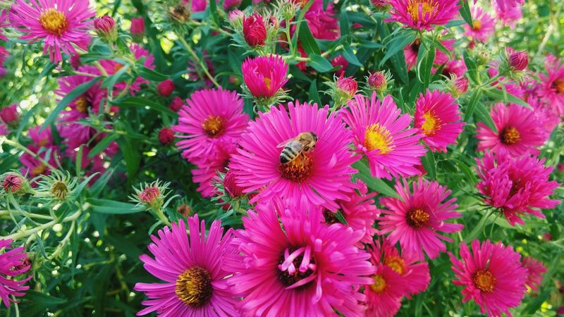 EyeEmNewHere Flower Beauty In Nature Bee 🐝 Life In Motion Slovenia ❤ EyeEm Nature Lover Eye4photography  Colour Of Life Eyevision. Plant