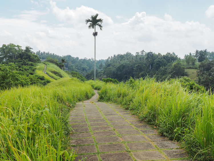 Bali Beauty In Nature Field Footpath Goals Grass Green Grass Growth Landscape Moving Forward  Moving On No People Palm Trees Pathway Positive Rain Forest Rim Scenics Sky The Way Forward Tranquility Tree Ubud Ubud, Bali Vanishing Point