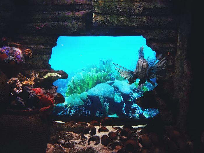 gazing out the window Aquarium Aquaria Klcc Cameraplusapp Mextures