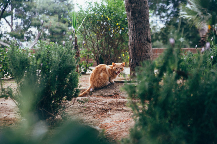 Portrait Of Cat Relaxing By Trees And Plants On Field