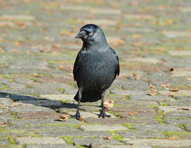 Black bird perching on a field