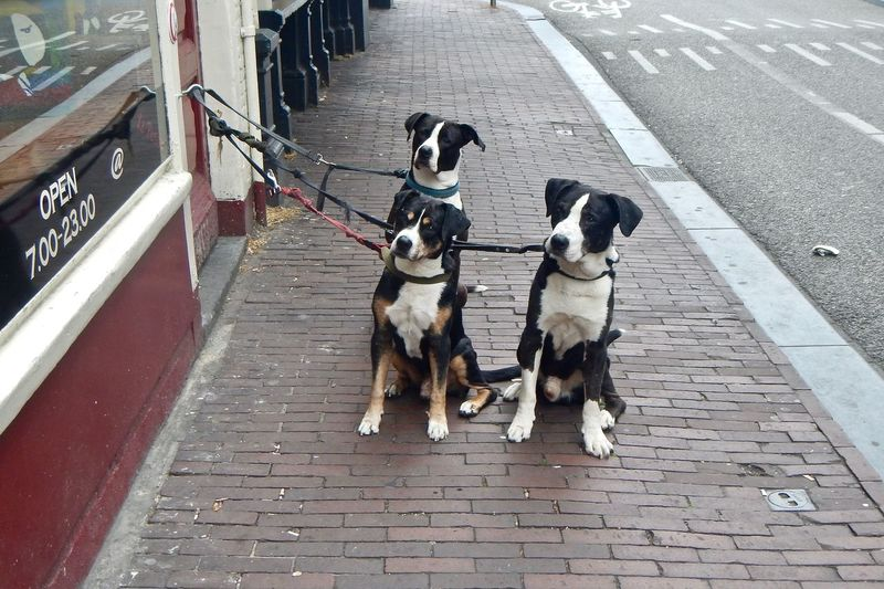 It doesn't open until 7?? What will we do??? I am sooooo hungry!!! Dog Faces Animal Dogs Sitting Looking Up Dogs Sitting Domestic Pets Vertebrate Animal Themes Domestic Animals Dog Canine Street City Outdoors No People Day Three Dogs Netherlands Amsterdam Mission EyeEmNewHere.