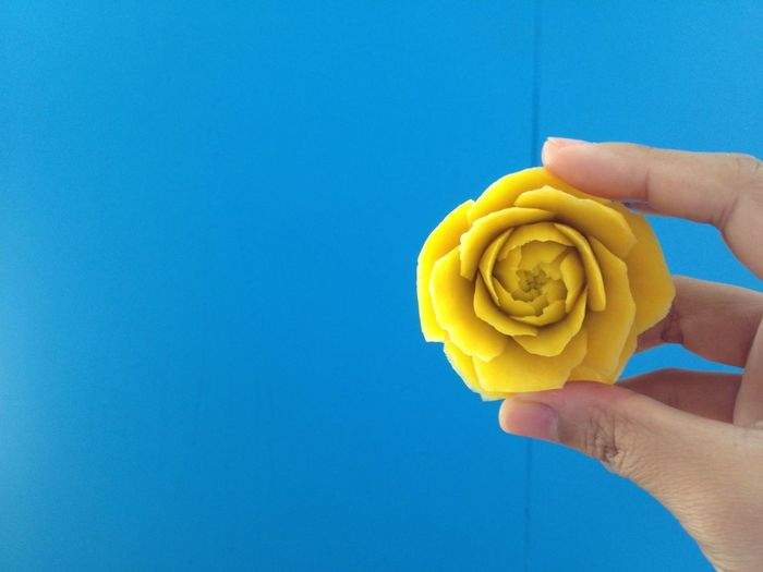 The yellow rose on the blue wall Flower Carving NotePad Human Hand Human Body Part Holding One Person Human Finger Blue Yellow Personal Perspective Unrecognizable Person Copy Space Food And Drink Real People Food Freshness Day Close-up Outdoors People