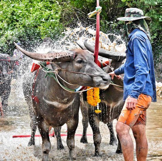 Full length of man splashing water in farm