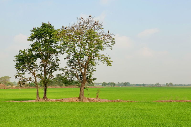 Field Landscape Tree Sky Beauty In Nature Nature Scenics - Nature Green Color Outdoors Tranquil Scene