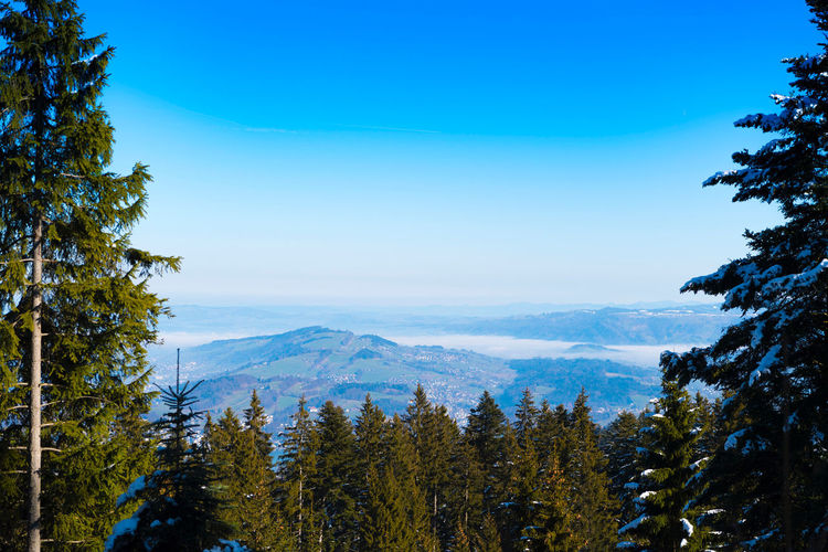 View of Pilatus Pilatus Mt. Winter Beauty In Nature Blue Clear Sky Cold Temperature Day Forest Landscape Mountain Mountain Range Nature No People Outdoors Pilatus Pine Tree Scenics Sky Snow Tranquil Scene Tranquility Tree