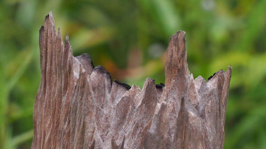 Close-up of leaf on wood
