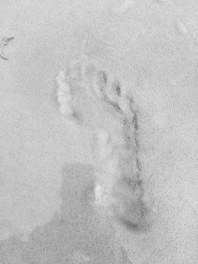 Sand Beach Nature Day Paw Print Animal Track Track - Imprint Outdoors No People Backgrounds Close-up Beauty In Nature EyeEm Gallery Eyem Gallery Eyeemphotography Blackandwhite
