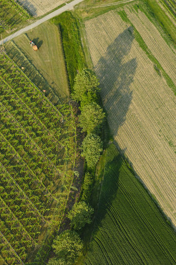 Aerial view of vineyards