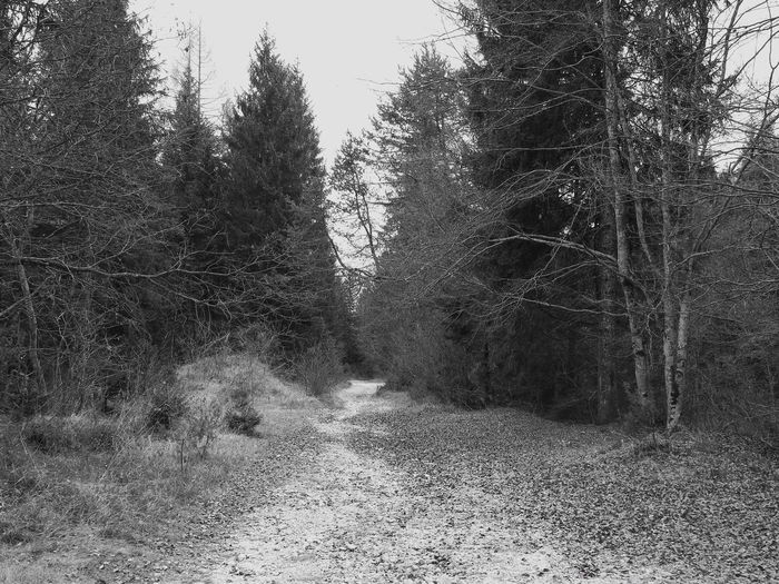 B&w Black & White Blackandwhite Branches From My Point Of View Pathway Photo Photography Trees Walking Walking Around