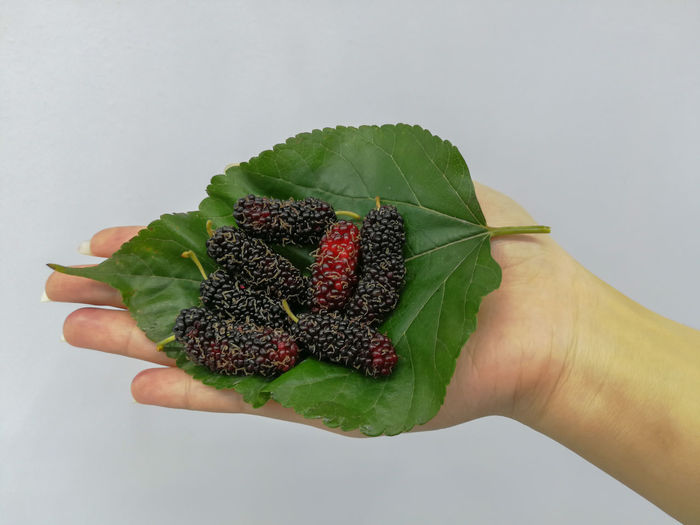 Mulberry Background Summer Sour Fresh Vegetarian Macro Colorful Floral Ripe Eating Eat Cook  Food Mulberry Nature Fruit Human Hand Healthy Lifestyle Fruit Handful Leaf Eating Holding Food And Drink Green Color Blackberry - Fruit Berry Fruit Strawberry Fruit Salad Berry