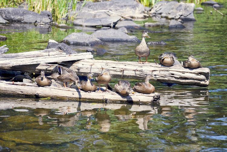 Birds perching on rock by lake