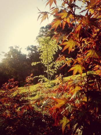 Garden Wildlife & Nature Treescollection Garden Photography