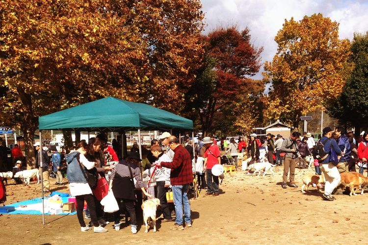 盲導犬 ボランティアズフェア ボランティアズデー 亀岡運動公園 Kameoka Kansai Guidedogsfortheblind Association Volunteer 's day. Guidedog