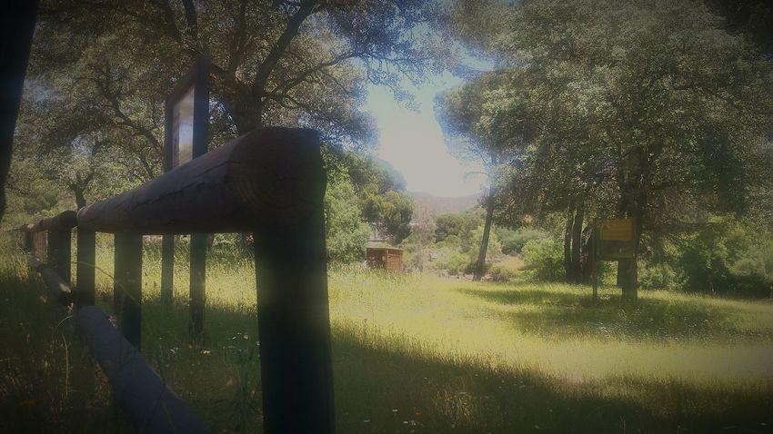 El regreso es necesidad a los lugares de la memoria Sierra De Andújar Parque Natural Parque Natural Sierra De Andújar Sierra Morena Jándula Andujar Sierra Morena De Jaén Tree Water Sky Growing