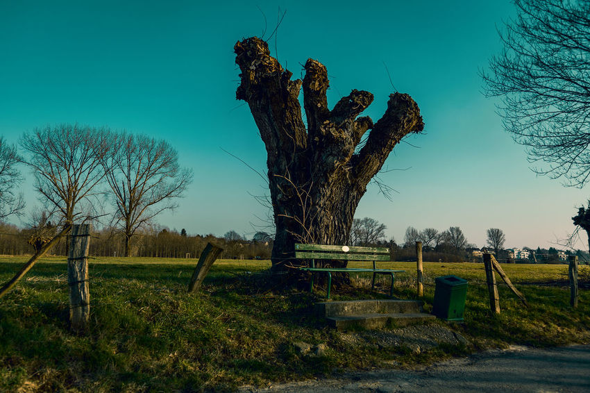 #kaiserswerthmeadows04 Bare Tree Barrier Beauty In Nature Blue Day Dead Plant Environment Fence Field Grass Land Landscape Nature No People Outdoors Plant Sky Tranquil Scene Tranquility Tree Tree Trunk Trunk