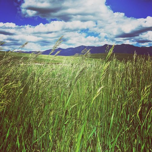 Outdoors Mountain Range Cloud - Sky Field Growth Tranquility Field Sky Nature Tranquil Scene Agriculture Grass Landscape Crop  Rural Scene Scenics Beauty In Nature Day Cereal Plant No People Mountain Wheat