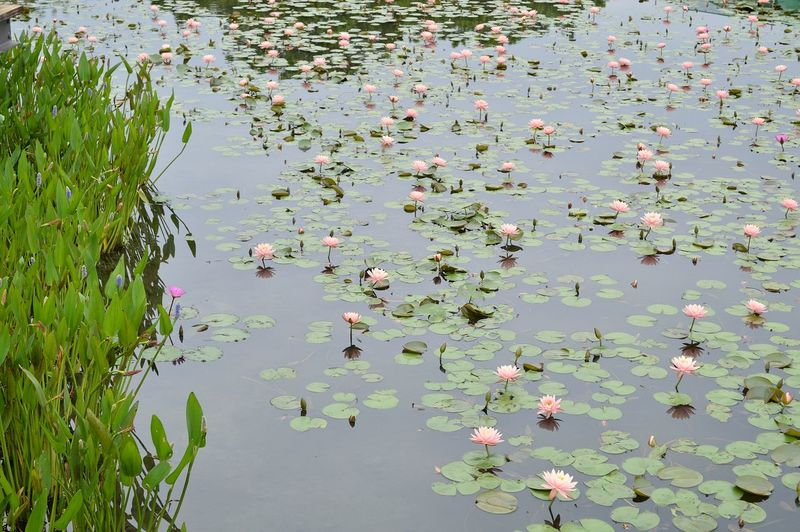 lake with pink