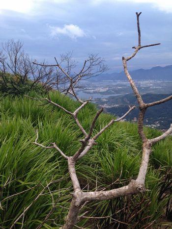 Vegetação lá na Pedra Bonita Rio De Janeiro Rio Brasil Brazil Trilha Floresta Da Tijuca