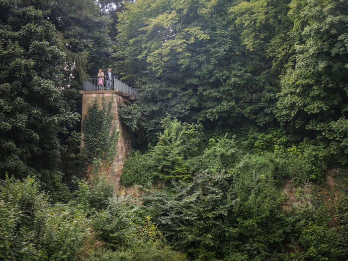 Low Angle View Of Man And Woman On Bridge Amidst Trees At Forest