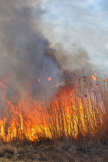 Burning Fire -