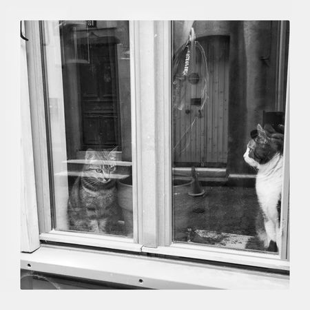 Streetphotography Domestic Animals Window Looking Through Window Reflection Bnw_life Bnw_collection Noir Et Blanc Streetphoto_bw Cats Of EyeEm