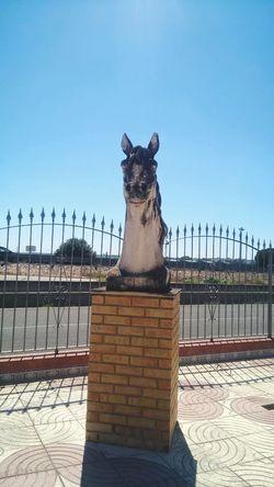 Animal Body Part Animal Head  Statue