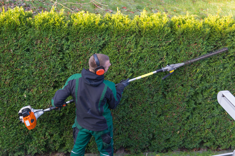 Gardener cuts a hedge with a gasoline hedge trimmer. Shaping a wall of thujas Plant Men Males  One Person Holding Nature Grass Leisure Activity Day Green Color Golf Club Boys Motion Growth Land Sport Child Golf Weekend Activities Outdoors Stick - Plant Part