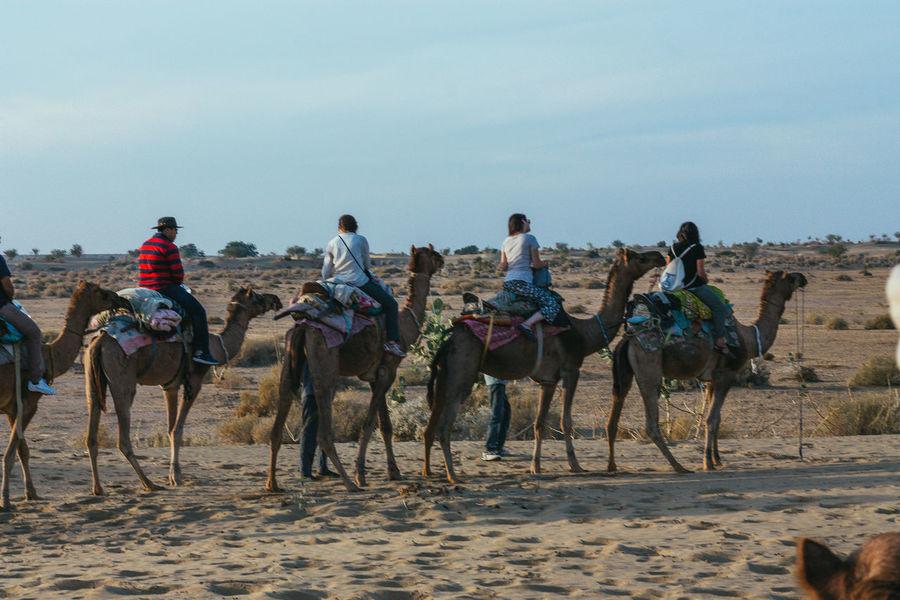 Desert Safari Camel Desert Friends Holiday India Jaisalmer Ride Safari Togetherness Working Animal
