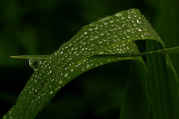 Close-up of fresh green grass blade with rain drops