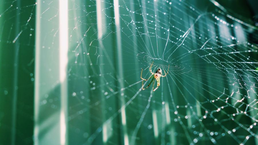 Garden Backyard Morning Spider Web Spider Invertebrate Arachnid Animal One Animal Animal Themes Insect Arthropod Animals In The Wild Close-up Animal Wildlife Fragility Animal Body Part Web Vulnerability  No People Survival Focus On Foreground Nature