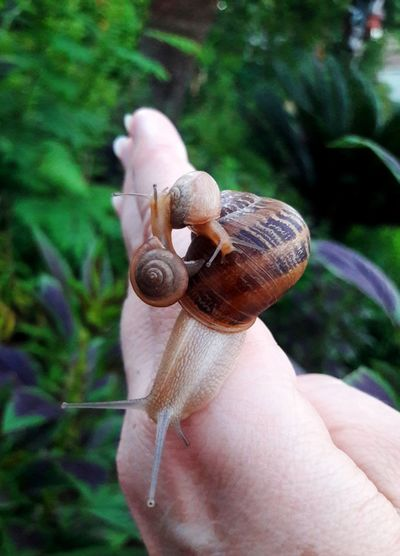 Close-up of snails on hand