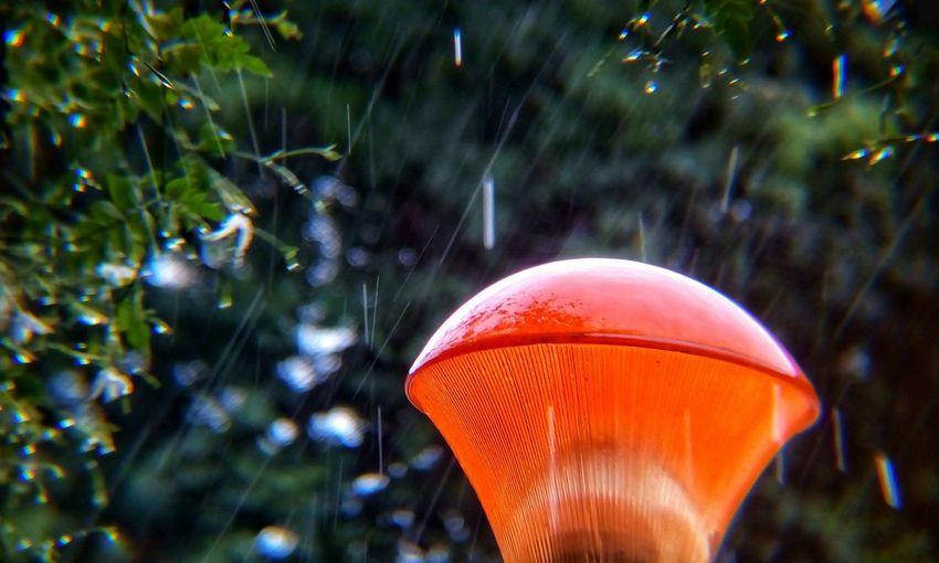 Raining ☔🌂