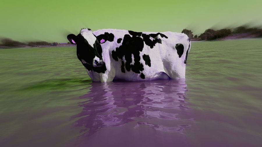COWPOWER! Pin Up Of The Month Cow Art The Alternative Bnw_friday_eyeemchallenge not for Cowards or Gossiping Backstabbers & Liars No Names Mentioning Creative Activism Free Spirit One Mans Trash Is Another Mans Treasure 1 Man Vs 10 K Precision ❤bombs