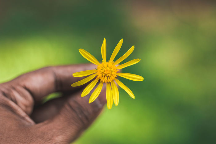 Beauty In Nature Body Part Close-up Finger Flower Flower Head Flowering Plant Focus On Foreground Fragility Freshness Hand Holding Human Body Part Human Hand Human Limb Inflorescence Nature One Person Outdoors Petal Plant Pollen Vulnerability  Yellow Yercaud The Still Life Photographer - 2018 EyeEm Awards The Traveler - 2018 EyeEm Awards