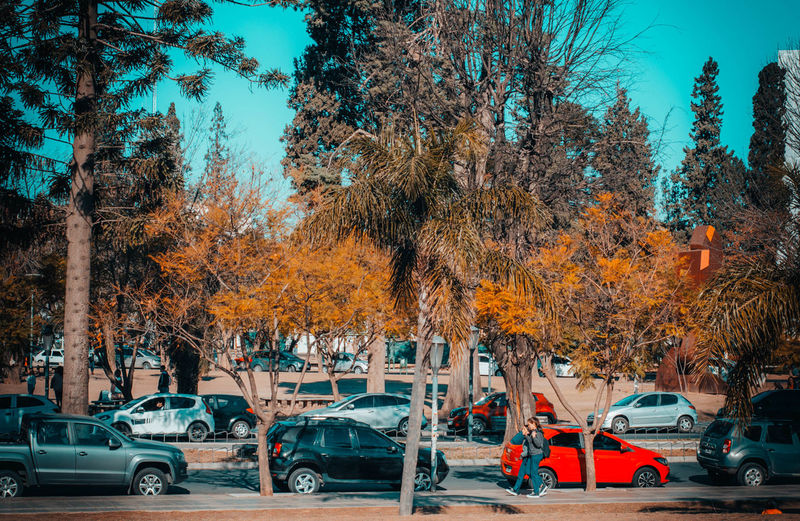 Autumn Car Change City Day Growth Incidental People Land Vehicle Mode Of Transportation Motor Vehicle Nature Orange Color Outdoors Plant Road Street Transportation Tree Tree Trunk Treelined