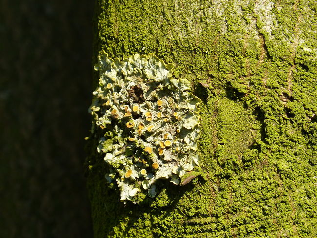 Love the nature ... :-) Art And Craft Art Photography Bark Texture Bark Texture Background Barks Of A Tree Beauty Art Beauty In Nature Close-up Day Esoteric Art Fairytales & Dreams Happy Birthday! Heart Heart Shapes In Nature Joy Of Life Love Art Love The Earth Love The Nature Magic Art Nature Nature Art Of Wood Nature Art Photography No People Outdoors Wonderland