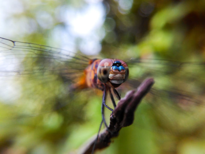 Dragonfly Insect Nature Close-up One Animal Macro Outdoors Day Mobilephotography Nature Beauty In Nature Dragonfly💛
