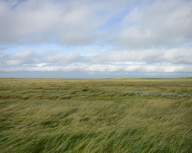 Green windy field lansdcape