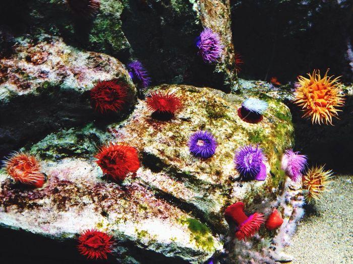 なんちゃらアネモネ。めっちゃ綺麗!! Aquarium Beautiful Colors Enjoying Life