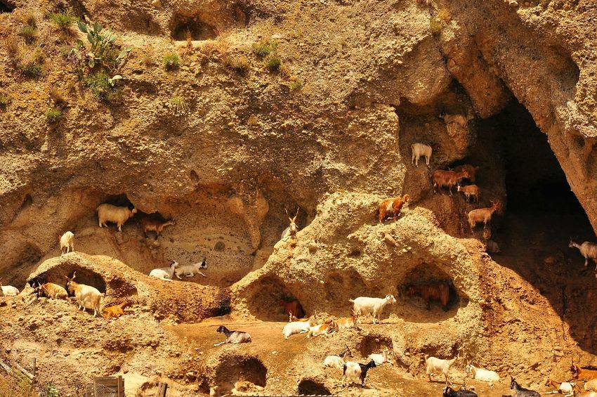 Learn & Shoot: Simplicity Goats Creeks Rocky Mountains Nature Animals South Italy