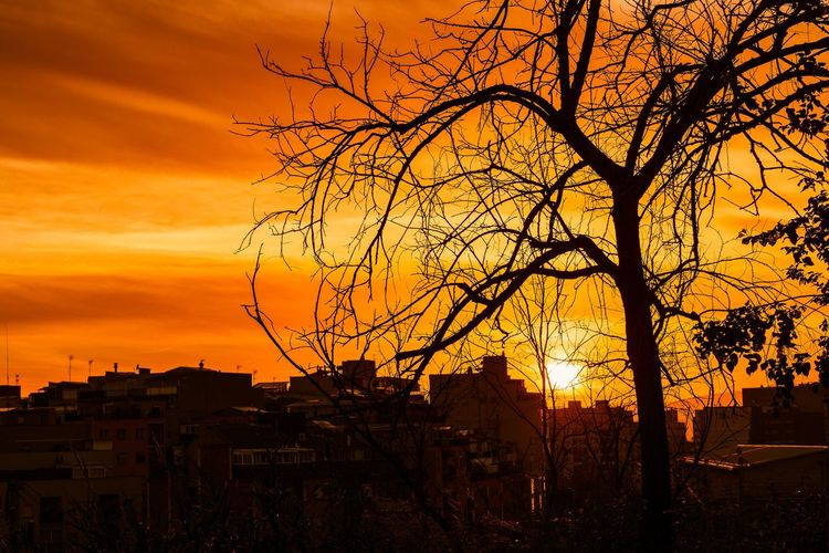 Sunset Architecture Sky Orange Color Building Exterior Tree Silhouette Built Structure Bare Tree Nature City No People Building Cloud - Sky Residential District Plant Beauty In Nature Outdoors Branch House TOWNSCAPE Romantic Sky Capture Tomorrow